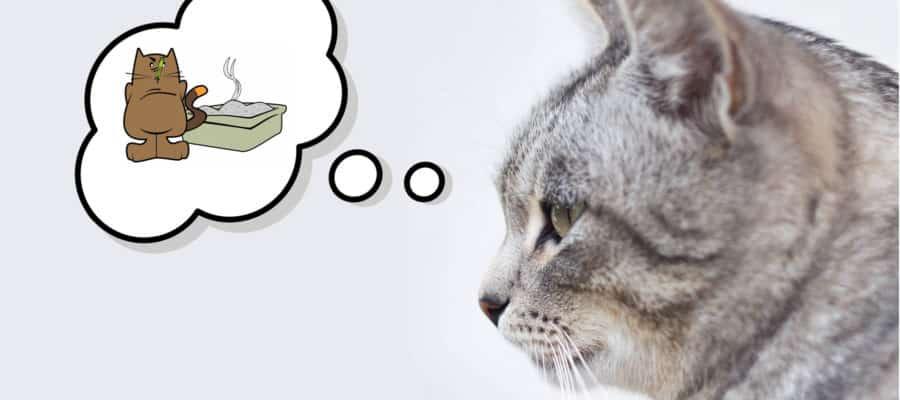 katze pinkelt neben das Katzenklo